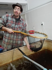 Petar ha abierto una pescadería en Zrenjanin. Tiene percas frescas de los lagos de los alrededores